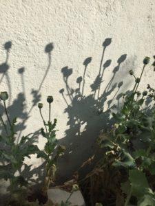 Ferienhaus Eifel Uedelhoven Nachbars Blumen 01.07.2019