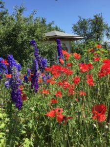 Ferienhaus Eifel Uedelhoven Nachbars Blumen 27.06.2019