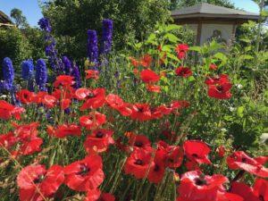 Ferienhaus Eifel Uedelhoven Nachbars Blumen 29.06.2019