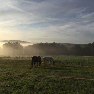 Ferienhaus Eifel Uedelhoven weidende Pferde